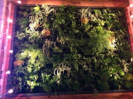 Darrow's living plant wall